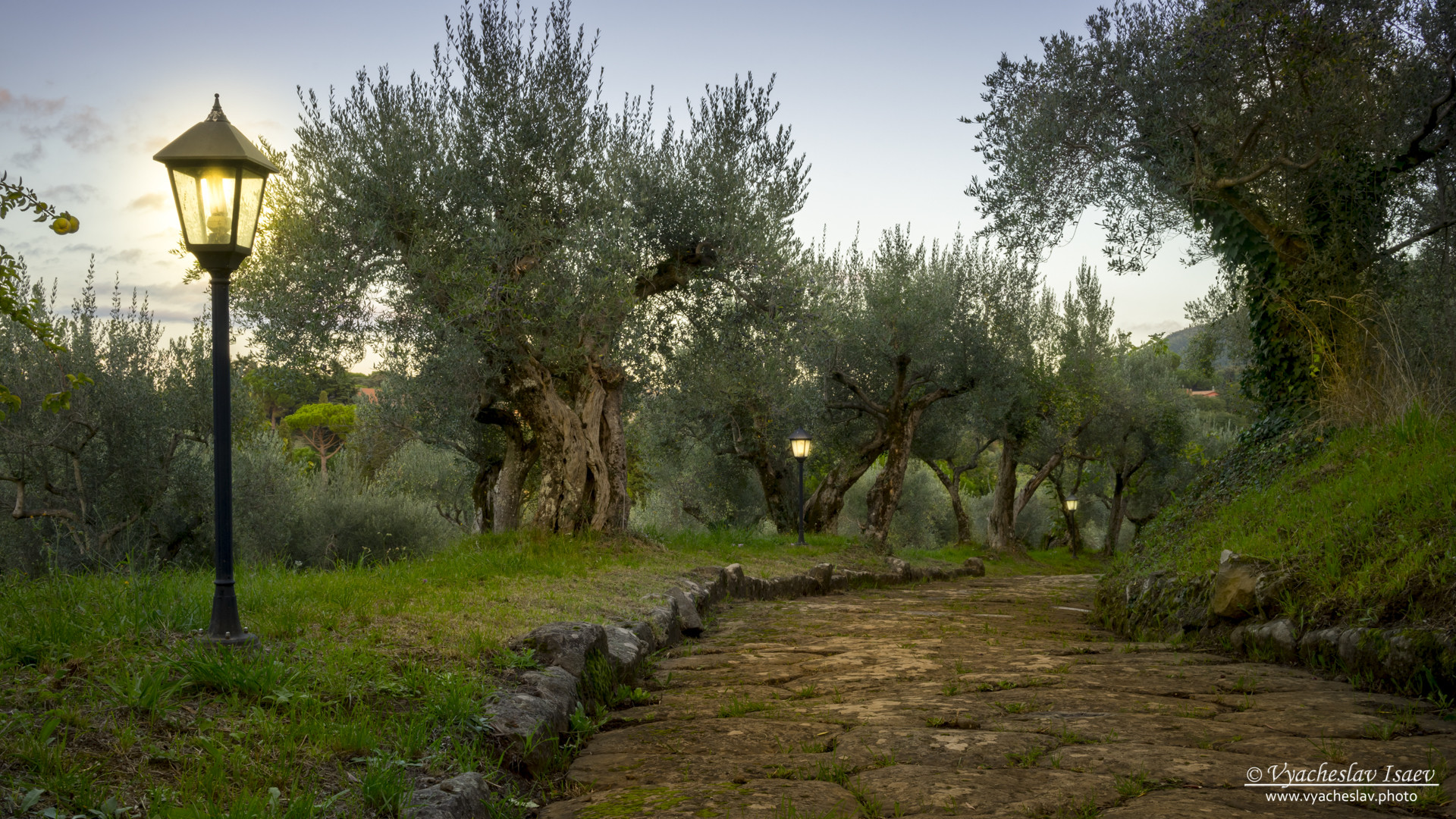 An ancient road in the olive garden by Vaycheslav Isaev. Frascati, Italy, 2015.